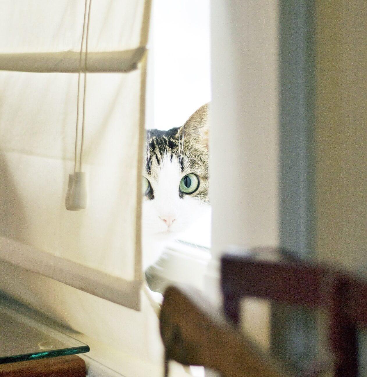 A lakberendezés fontos része: a függöny